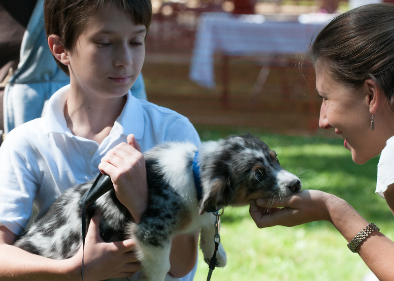 DRHC Dog Show 2012-5150