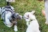 DRHC Dog Show 2012-5228