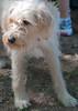 DRHC Dog Show 2012-5180