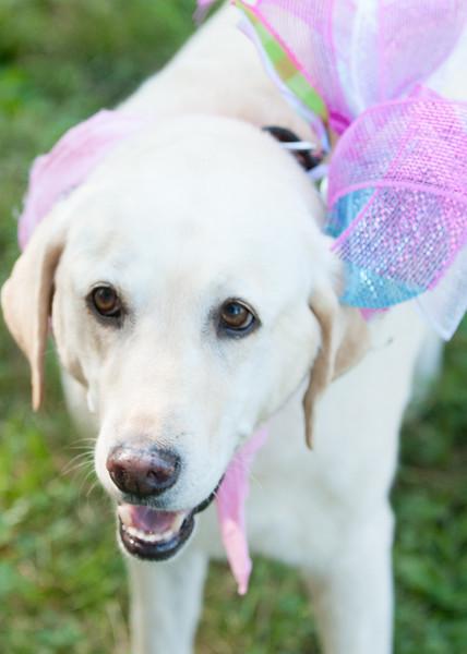 DRHC Dog Show 2012-5141
