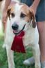 DRHC Dog Show 2012-5272