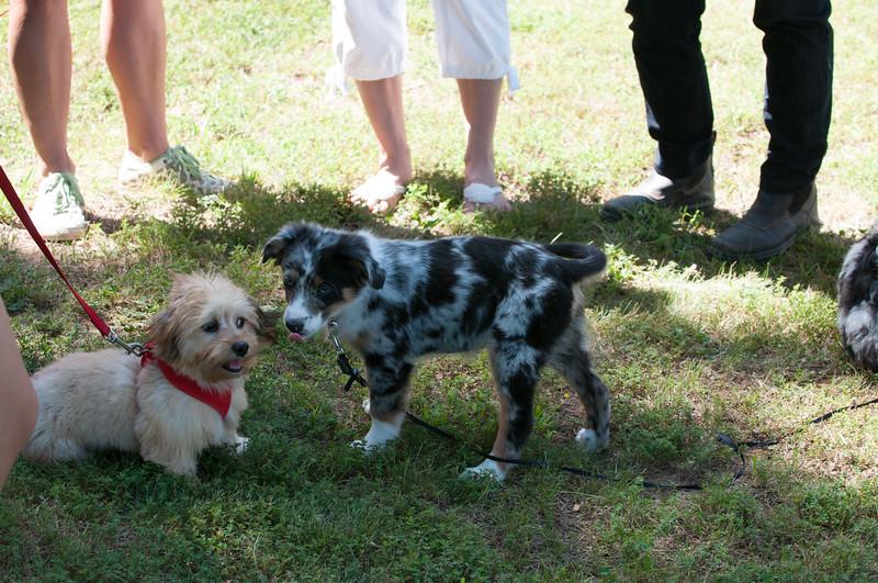 DRHC Dog Show 2012-5252