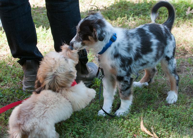 DRHC Dog Show 2012-5248