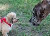 DRHC Dog Show 2012-5191