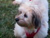 DRHC Dog Show 2012-5146
