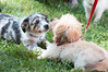 DRHC Dog Show 2012-5212