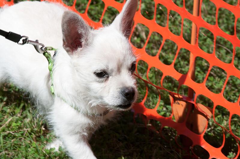 DRHC Dog Show 2012-5216