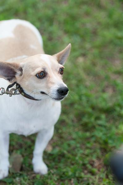 DRHC Dog Show 2012-5269