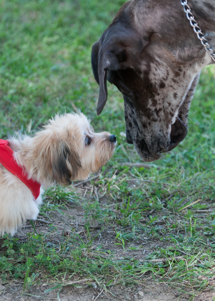 DRHC Dog Show 2012-5194