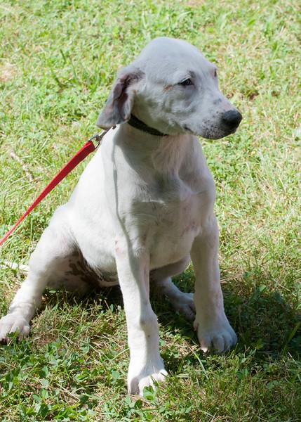 DRHC Dog Show 2012-5232