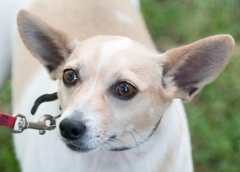 DRHC Dog Show 2012-5268