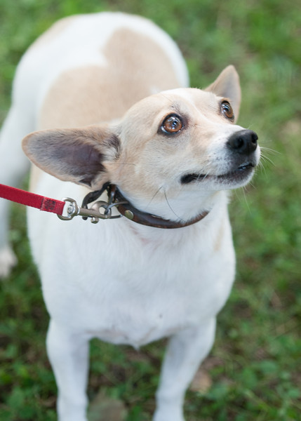DRHC Dog Show 2012-5270