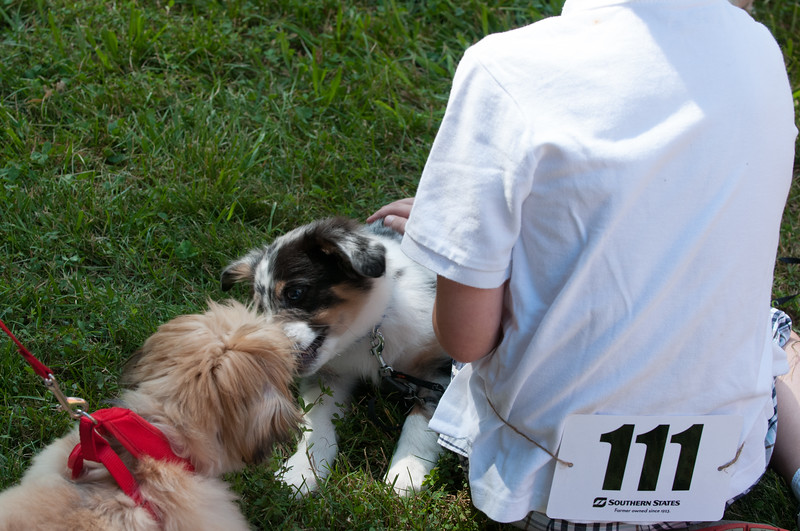 DRHC Dog Show 2012-5233