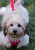 DRHC Dog Show 2012-5147