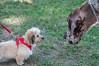 DRHC Dog Show 2012-5190