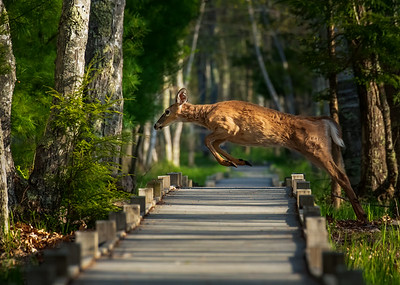 Jump over Jesup Path