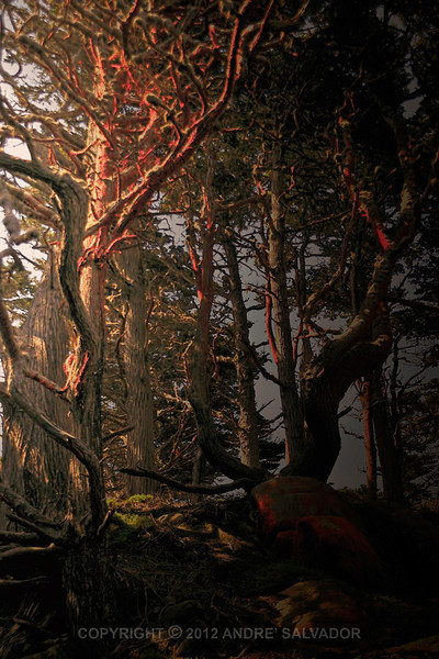 Sunrise view at Point Lobos State Reserve, California, USA.