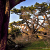 A view at Point lobos State Reserve, California, USA.