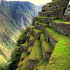 "This view is a good example of the planting terraces cut off a steep mountain in Macchu Picchu, Peru. The height of each terrace from a lower one is about 5'-0""."