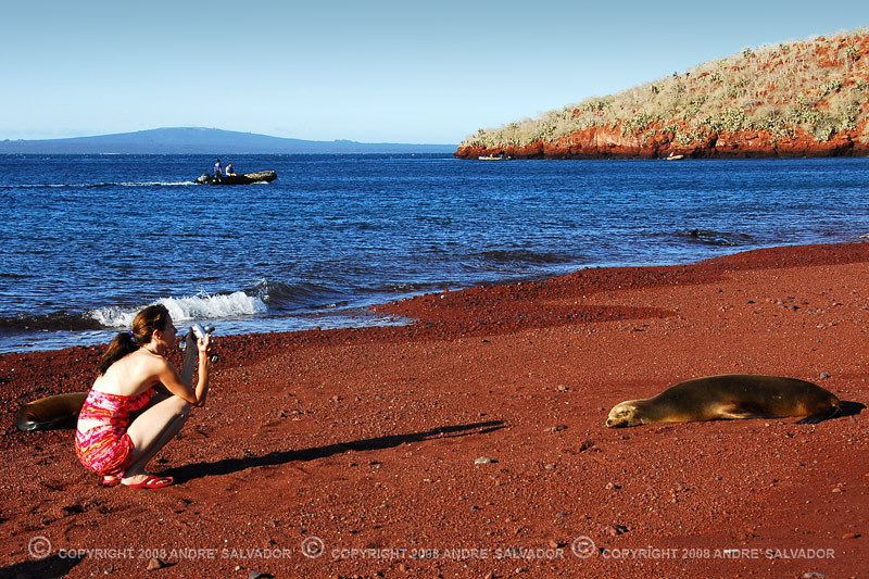 As close as the length of her shadow. Seen at rabida Island of Galapagos Island Group, Ecuador.