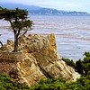 The Lone Tree - The much photograph pine tree at 17-Mile Drive, Pebble Beach, Monterey, California, USA.
