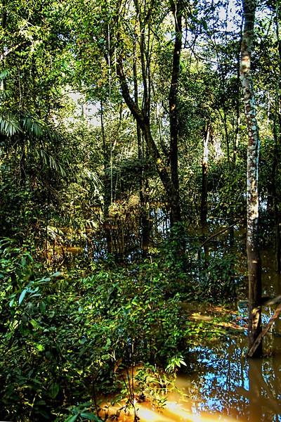 Rain forest at Amazon River, Rio Negro, Brazil.