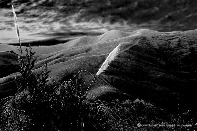 A view from El Cerrito of Briones Regional Park, California.