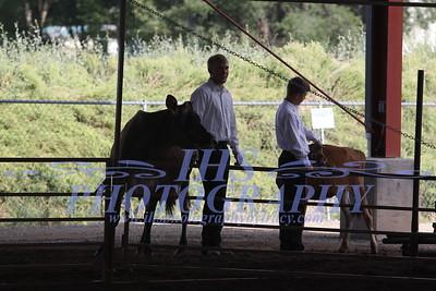 Showmanship- Dairy Cows
