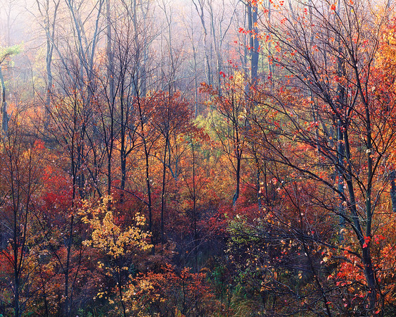 TREES FALL MASSACHUSETTS