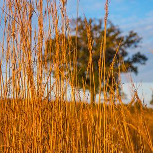 Autumn Field 2