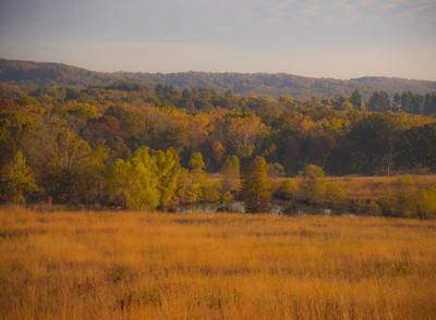 Autumn Field 15