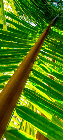 Palms Fronds 16