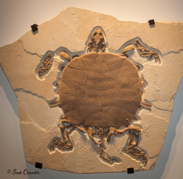 Prehistoric Reptile