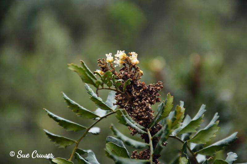 African Bush Floral