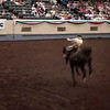 Oklahoma City rodeo - Horse Rider