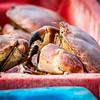 Life is a crabpot