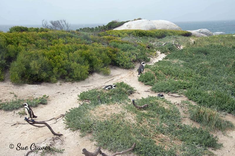 Penguin Paths
