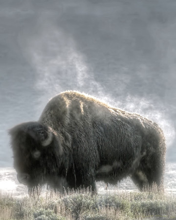 Steamy Bison