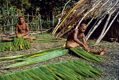 12 SOLOMON INSELN. Palmblätter für die Dachdeckung auf den Solomon Inseln