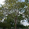 DETROIT ZOO TREE