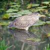 MARSH BIRD IN WATER