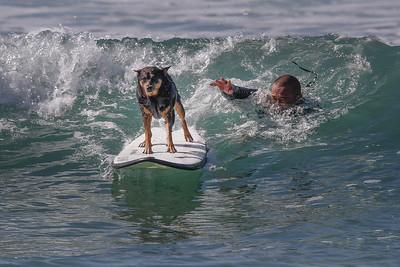Abbie the surfing dog.