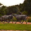 Cowboy Herding