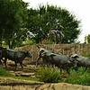 Cowboy Overlooking Herd