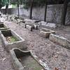 Sarcophogi at Necropole des Alyschamps