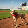 Pacific Coast League: El Paso Chihuahuas vs. Iowa Cubs