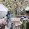 Popcorn Park Zoo April 2013_08