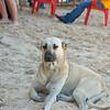 Punta Cana  - 032