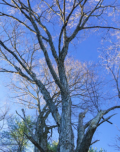 Maple Tree and Sky / Sharon, Vermont