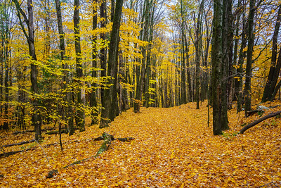 Woods Road / Norwich, Vermont
